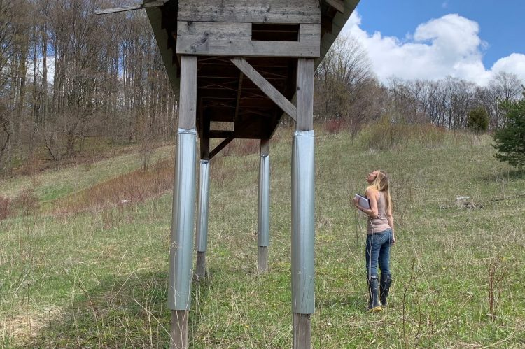 In a wooded clearing, Dr. Jennifer Clary-Lemon stands beside Hirondelusia, a barn swallow habitat made of reclaiming barn wood and aluminum siding.